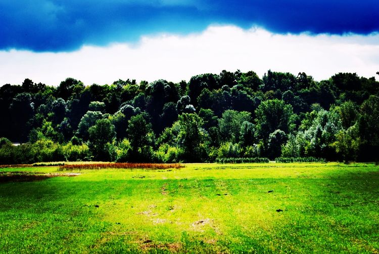 Tree Soccer Field Sky Grass Green Color Landscape
