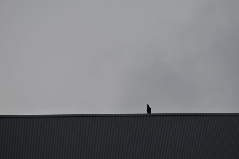 Bird Building Capture The Moment Cloudy Sky Crow Edge Of The World Silent Moment Sky