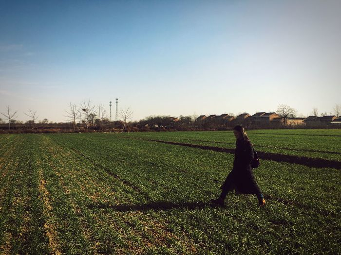 Field Clear Sky Growth One Person Agriculture Real People Nature
