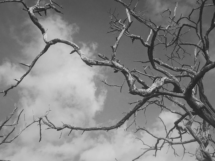 Bend but not break Branch Bare Tree Tree Low Angle View Nature Sky Outdoors Cloud - Sky Dead Tree Dead Plant Day Beauty In Nature No People