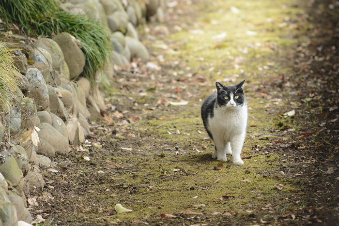 Animal Themes Cat Cats Day Domestic Animals Domestic Cat Feline Field Mammal Nature No People One Animal Outdoors Pets Portrait Sitting Standing ねこ 猫 白黒猫 野良猫