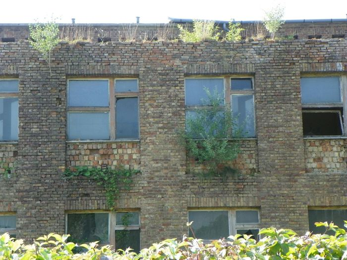 Nature Trees On The Roof Insistence To Life Modern Ruins