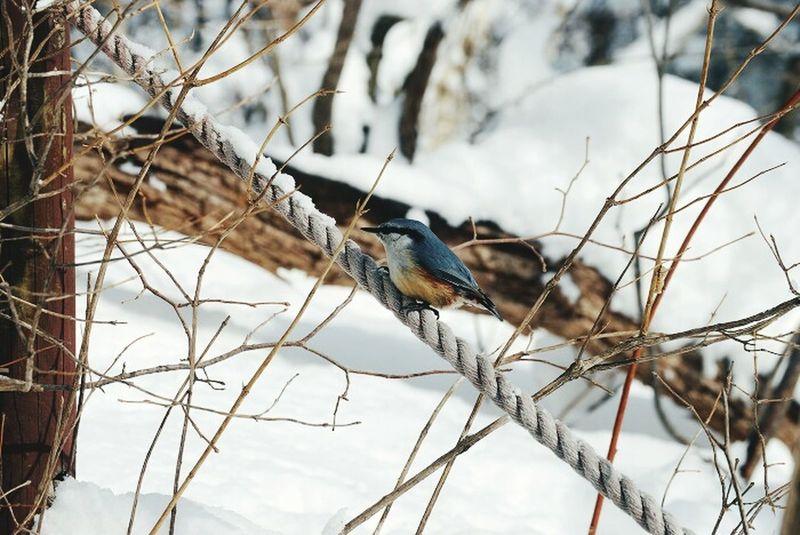 Winterscapes Winter Bird Snowwhite Snow Tree Nature Photography Take Photos