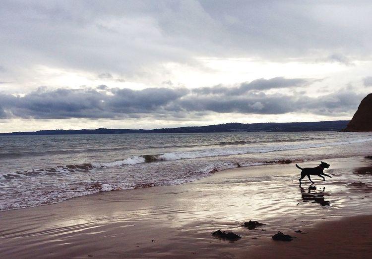 Dog Beach Sea Ocean Shoreline Shore Sand Waves Run Running Coast Seaside Devon English Beach England