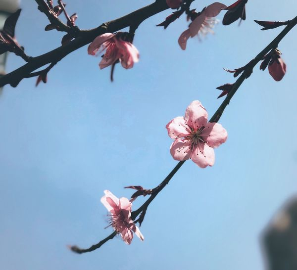 Flower Beauty In Nature Nature Fragility Growth Freshness Low Angle View Petal No People Twig Flower Head Close-up Springtime Pink Color Day Blossom Outdoors Tree Branch