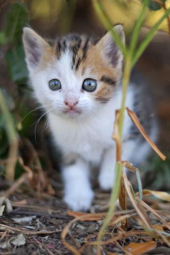 Portrait of kitten walking on field