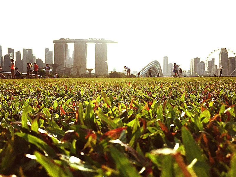 Marina Sunshine Photography Beutiful  Photooftheday Enjoy Singapore Picnic Relaxing #life Is Good  Fresh On Eyeem