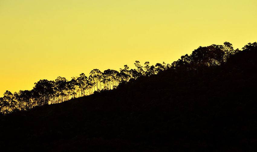 Inclined landscape with a yellow sky Climb Copy Space Day Inclined Inclined Horizon Landscape Nature Outdoors Silhouette Tranquil Scene Tranquility Trees Yellow Sky Sommergefühle Neon Life Colour Your Horizn