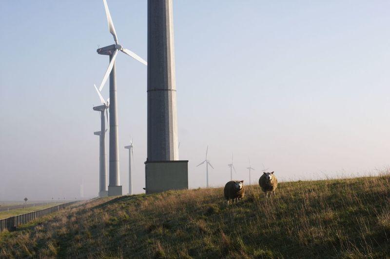Sheep by wind turbine on grassy landscape