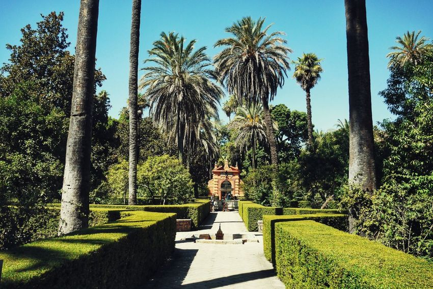Summer Holiday SPAIN Sevilla Tree Palm Tree Park - Man Made Space Shadow Sky Grass Garden Path Yard Blooming Summer Exploratorium