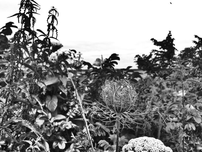 More flowers | Nature Field Outdoors Beauty In Nature Focus On Foreground Close-up Flower Ostsee Himmel Schwarz & Weiß Landscape_Collection Landscape Blume Blumen Blackandwhite Photography Bnw_collection Flower Black And White Black And White Blumenwiese The Week On EyeEm Flowers_collection Flowers, Nature And Beauty