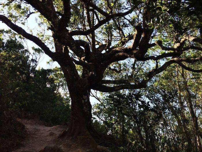 🌬🌲🌳 Tree