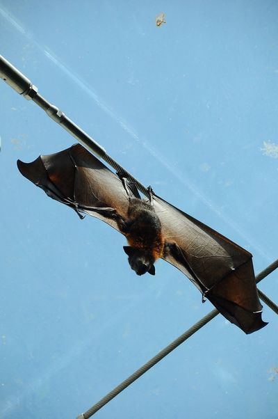 Schönbrunn Zoo Flying Fox