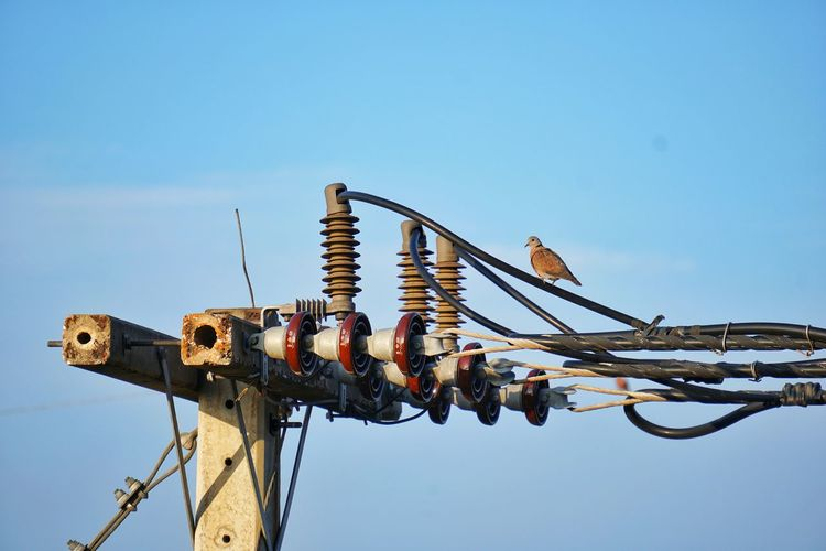 Bird perching on electricity cable