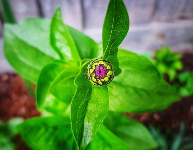 Bloom The Week