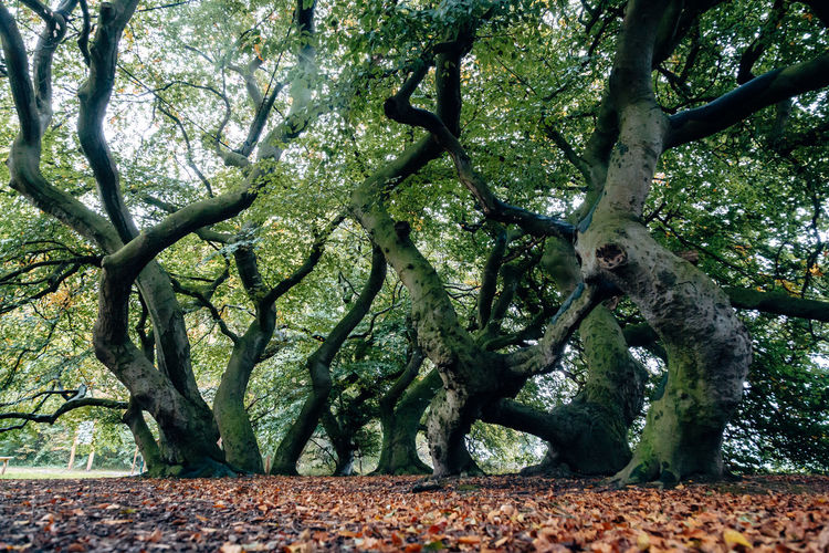 Trees growing in park during autumn