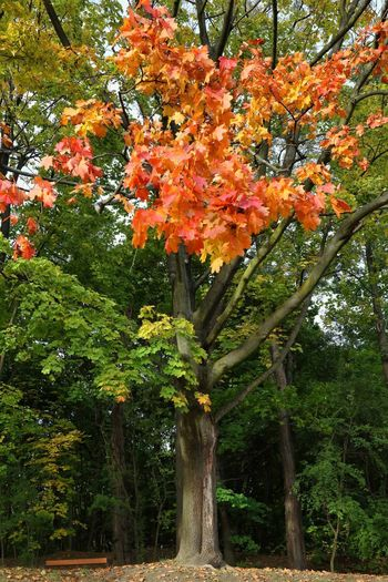Low angle view of flowering trees and plants during autumn