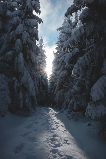 Snow covered land amidst trees against sky