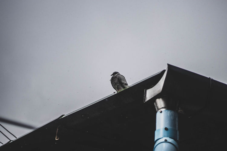 Low angle view of bird perching on railing against sky