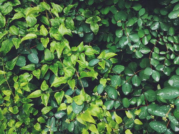Full frame shot of wet plants during rainy season