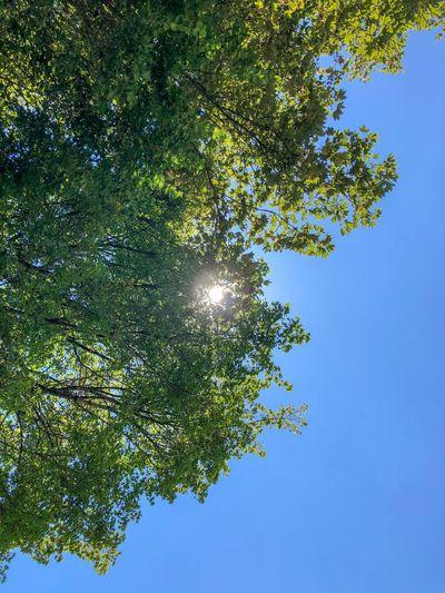 Summer Views