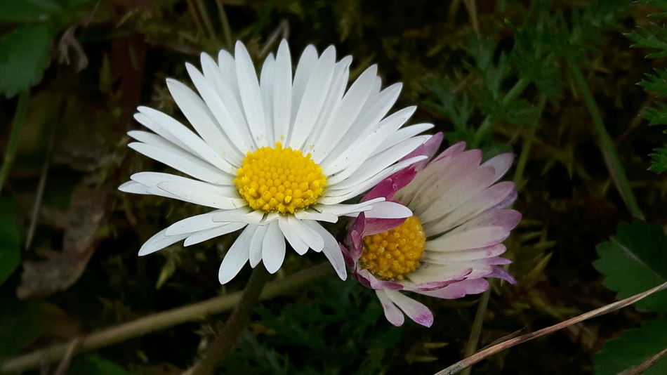 Flower Head Flower Fragility Nature White Color Freshness Petal Beauty In Nature Growth Close-up Pollen Plant Outdoors Blooming No People Day