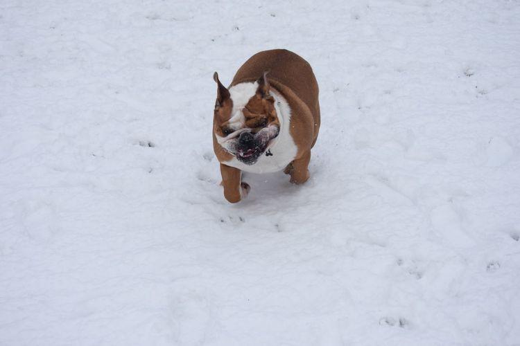 High angle view of dog on snow
