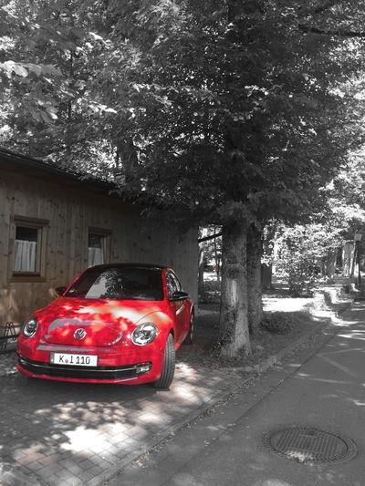 Car Splash Red Nature