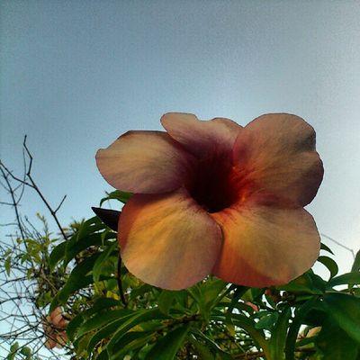 Flores ao cair da tarde / 1
