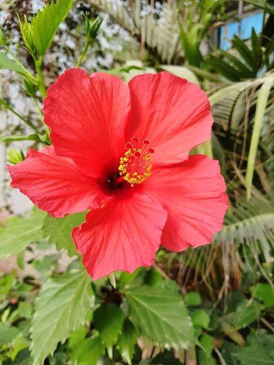 open flower.