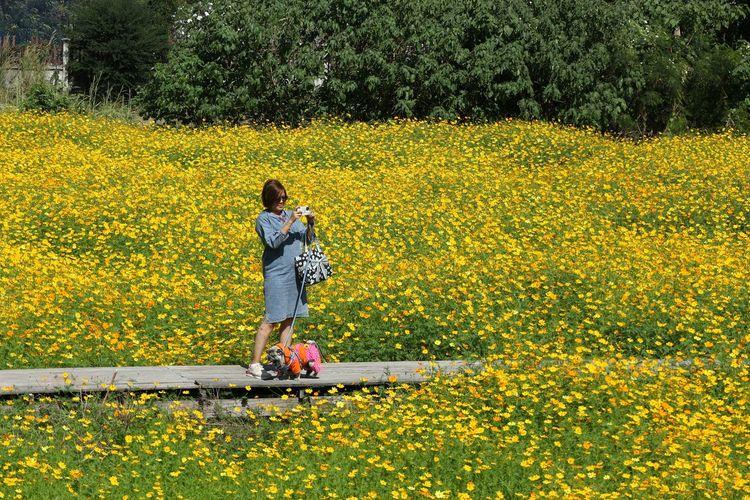 Rear view of woman on yellow flower field