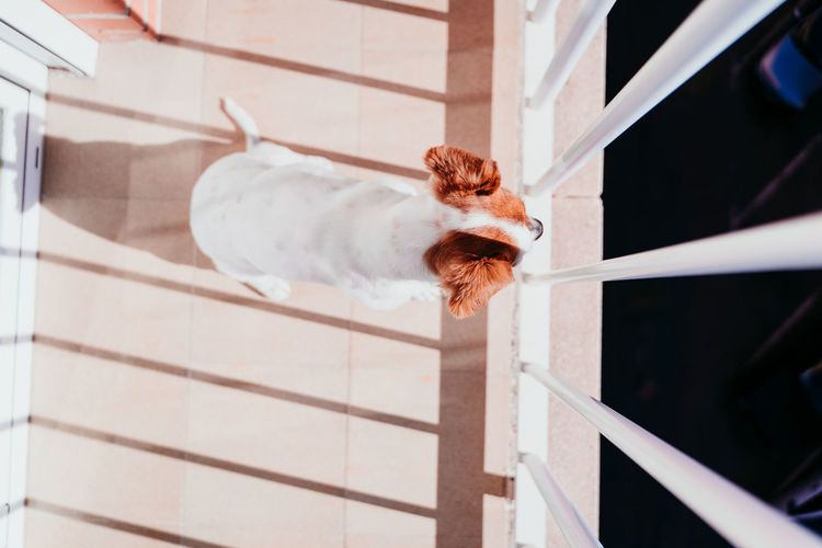 High angle view of dog in balcony