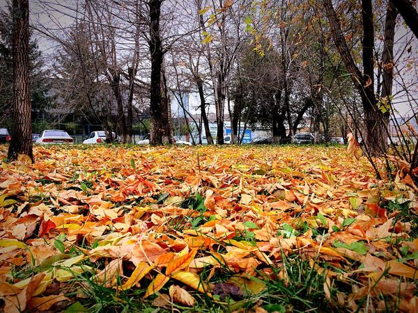 Autumn 🍂 Autumn No People Day Plant Nature Krasnoyarsk