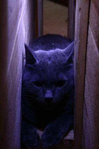 Cat Pets Hide