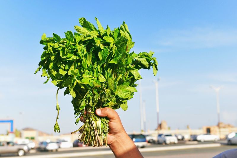 Cropped Image Of Hand Holding Mint Leaves Against Sky