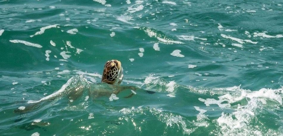 A turtle in the ocean Water Animal Themes Sea Animals In The Wild High Angle View Swimming Nature Animal Wildlife Waterfront Outdoors One Animal Day Mammal No People Beauty In Nature Aquatic Mammal