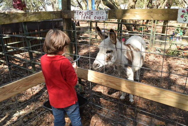 Petting zoo Animal Themes Boy Casual Clothing Child Day Domestic Animals Donkey Livestock Mammal One Animal One Person Outdoors Petting Zoo Standing Zoo