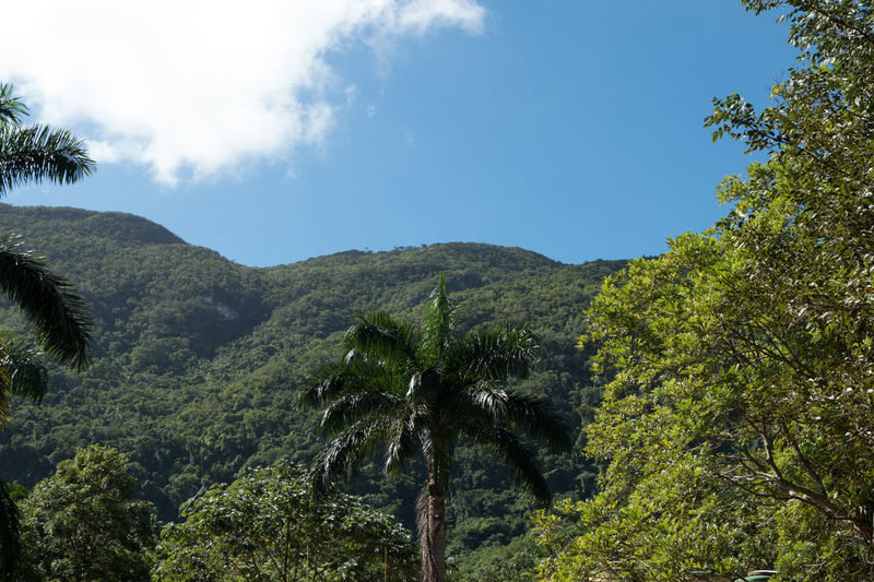 Alturas de Banao: The Heights Alturas De Banao Beauty In Nature Clouds And Sky Cuba Cuba Collection Day Growth Landscape Mountain National Park Nature Nature No People Outdoors Palm Tree Scenics Sky Tree