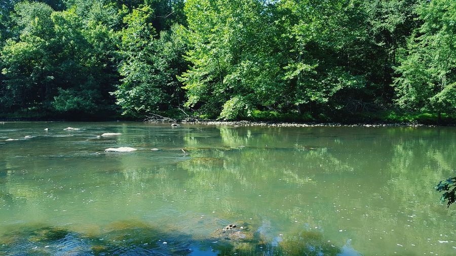 WHT Water Scenics Nature Tranquility Tranquil Scene Waterfront Beauty In Nature River Biking Rail Trail Trail View River View Wht