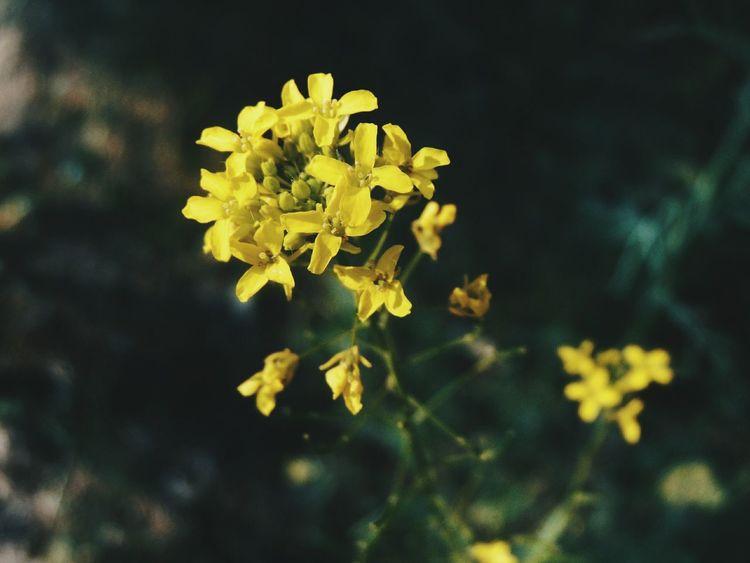 Vscocam Vsconature Vscoflowers Vscogood VSCO Flowers