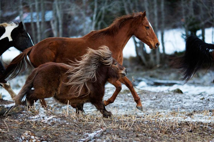 Horse Running Outdoors
