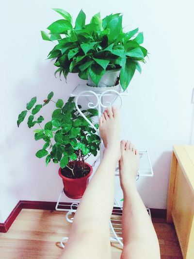 Feet and green plants