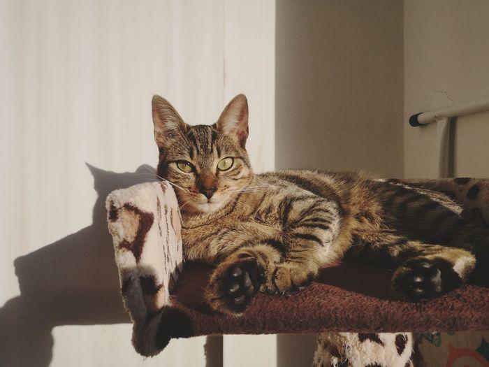 #bogota #lovePhotograph #shadow #blackwhite #sunlight #lovecats #cat EyeEm Selects Pets Portrait Home Interior Domestic Cat Looking At Camera
