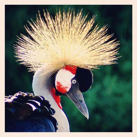Réserve de Sigean Nikonfr Bird Oiseaux Languedoc Sigeanreserveafricaine Sigean Colors Animal Naturelovers