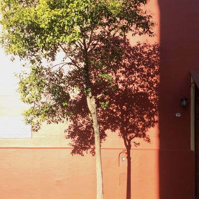 Tree Plant Nature Growth No People Architecture Outdoors Day Sunlight Wall - Building Feature Built Structure Wall Entrance Door Shadow Building Exterior Hanging