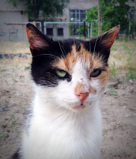 Cat Homeless Cats Cat♡ Cats
