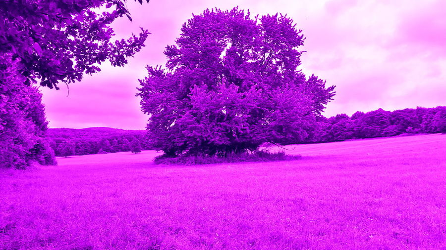 Beauty In Nature Cloud - Sky Male Karpaty Nature Pink Pink Color Purple Sky Tree
