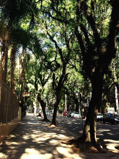Nature Porto Alegre Clickpoa