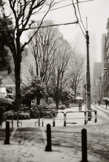 Ladygrey Lomography Blackandwhite Film Photography Snow Winter Cold Temperature Tree Outdoors