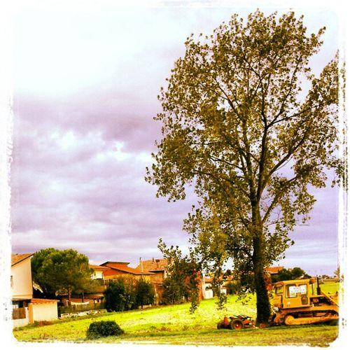 Summer Trees Sky